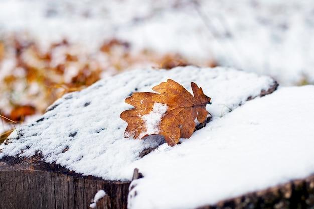 Folha de carvalho coberta de neve em um toco coberto de neve, vista de inverno