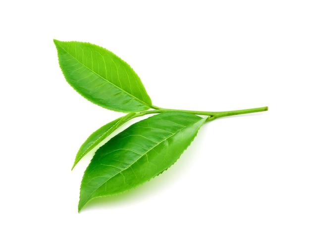 Folha de chá verde em fundo branco