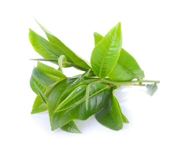 Folha de chá verde isolada no fundo branco.