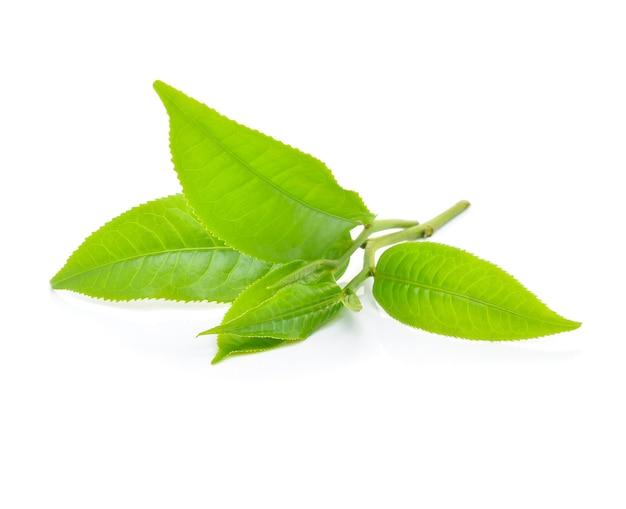 Folha de chá verde isolada no fundo branco