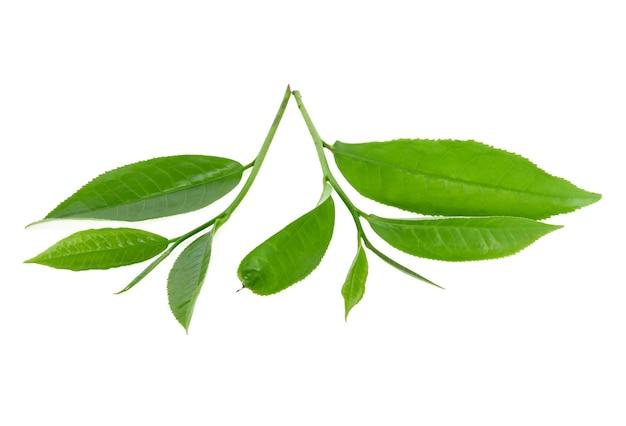 Folha de chá verde isolada