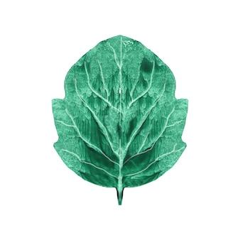 Folha de choupo desenhada à mão