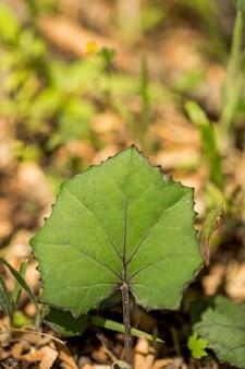 Folha de close-up com fundo desfocado de floresta