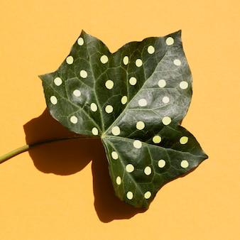 Folha de close-up pintada com pontos e sombra