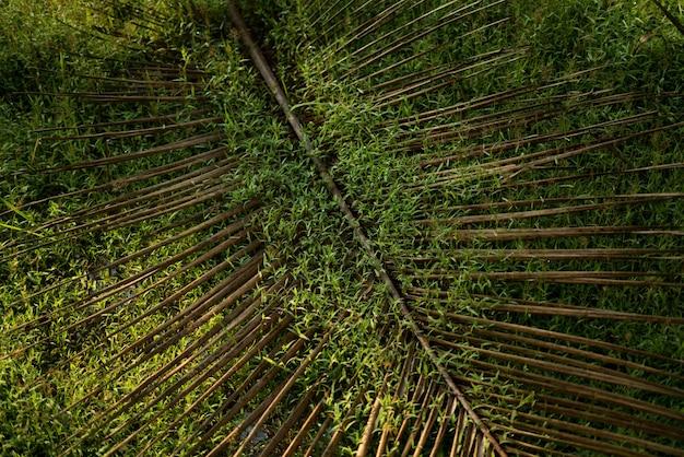 Folha de coco na grama verde