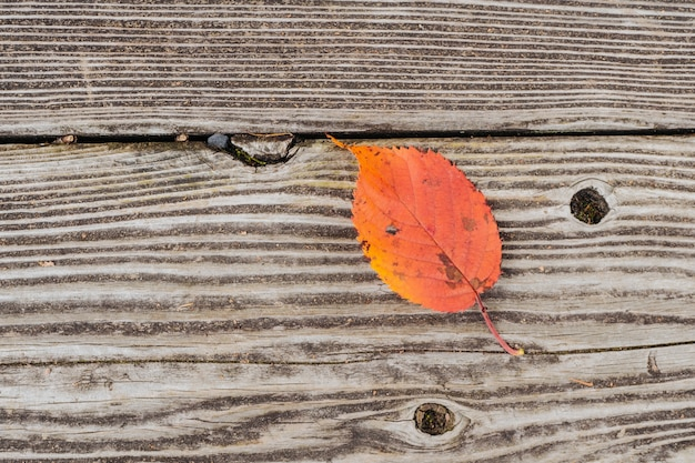 Folha de cor na textura de madeira