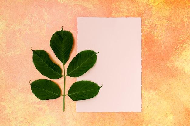Folha de faia comum simplista com mock-up