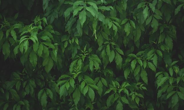 Folha de fundo verde folhas verdes escuras