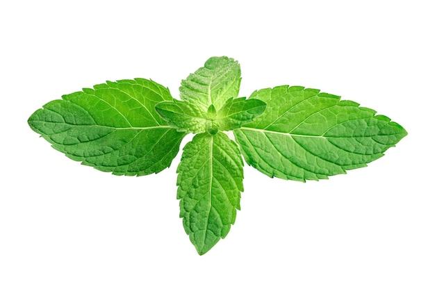 Folha de hortelã, folha de hortelã-pimenta crua fresca isolada no fundo branco.