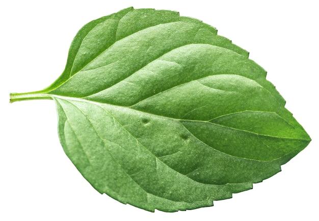 Folha de hortelã isolada em uma textura de folha de hortelã