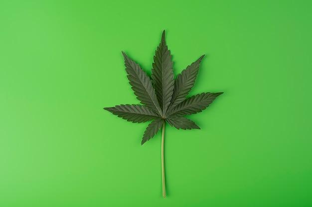 Folha de maconha fresca verde em um fundo verde com um espaço de cópia para texto, cânhamo medicinal, cbd