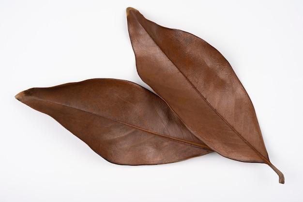 Folha de magnólia seca de vista superior dois marrom, isolada no fundo branco. fundo de folhas marrons