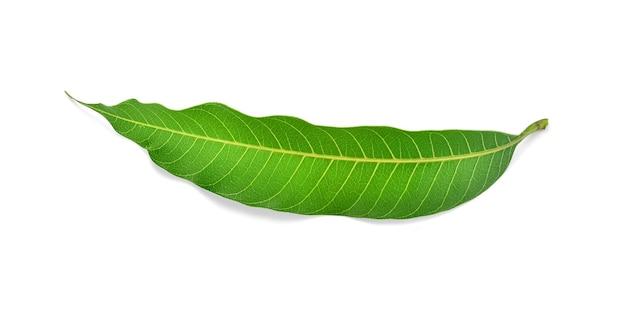 Folha de manga isolada sobre um fundo branco