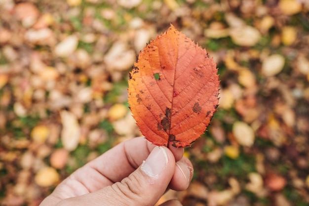 Folha de maple colorida no outono de japão
