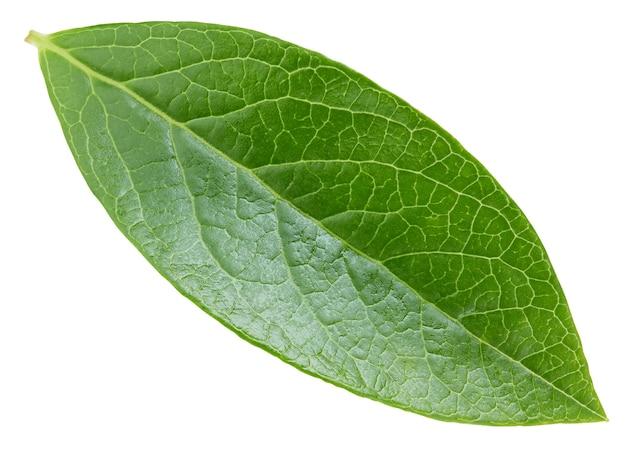 Folha de mirtilo isolado no fundo branco. trajeto de recorte de folhas