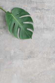 Folha de monstera em um fundo de textura suave