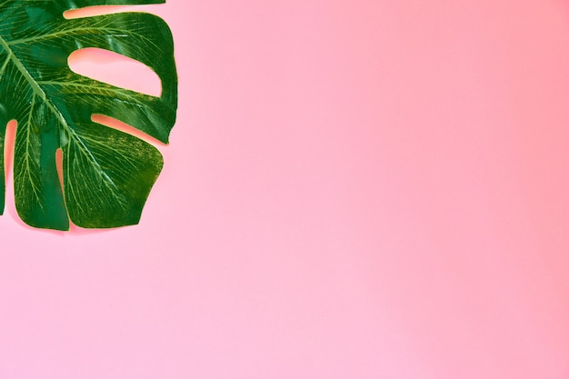 Folha de monstera na moda têxtil verde na rosa.