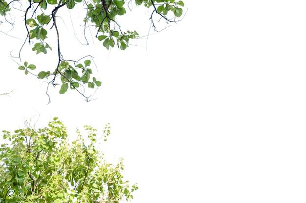 Folha de natureza com espaço livre