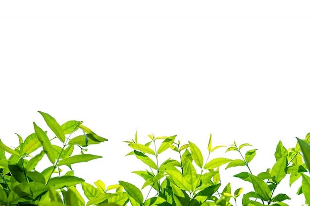 Folha de natureza com fundo isolado