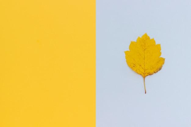 Folha de outono amarela em cinza - fundo amarelo