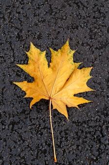 Folha de outono amarela em fundo preto