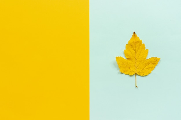 Folha de outono amarela sobre fundo amarelo azul
