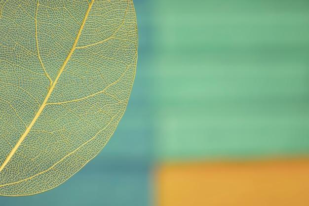 Folha de outono colorida com espaço de cópia