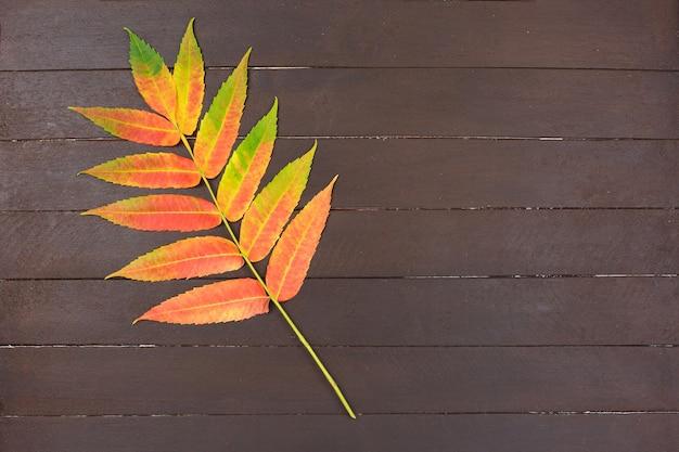 Folha de outono colorida em fundo de madeira. conceito mínimo
