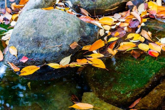 Folha de outono colorida flutuando na água clara.