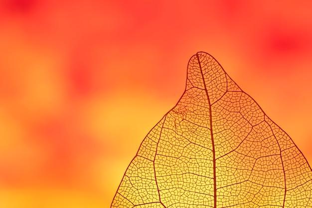 Folha de outono colorida laranja abstrata
