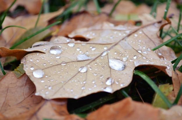 Folha de outono com gotas de água fundo macro
