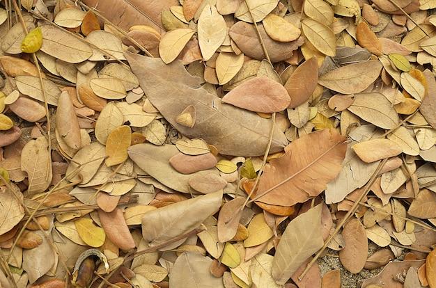 Folha de outono com luz suave e foco suave