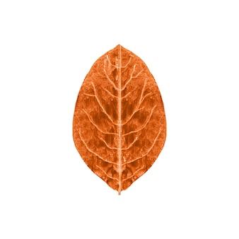 Folha de outono de pintados à mão.