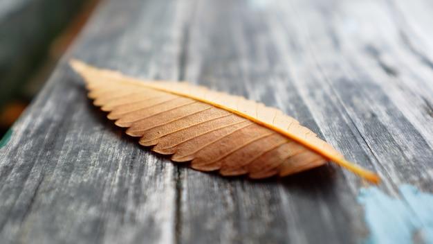 Folha de outono em uma superfície de madeira em um parque
