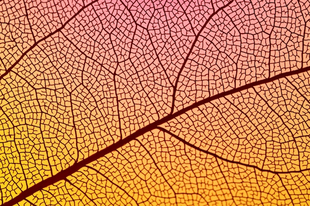 Folha de outono laranja abstrata