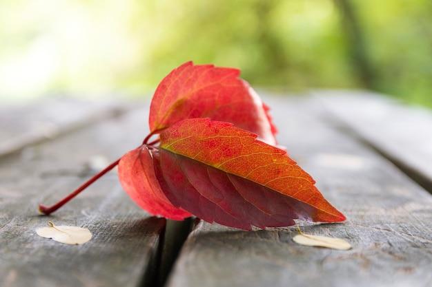 Folha de outono na mesa de madeira e vegetação de bokeh
