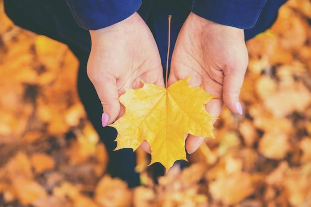 Folha de outono nas mãos de uma menina. foco seletivo.