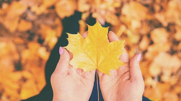 Folha de outono nas mãos de uma menina.