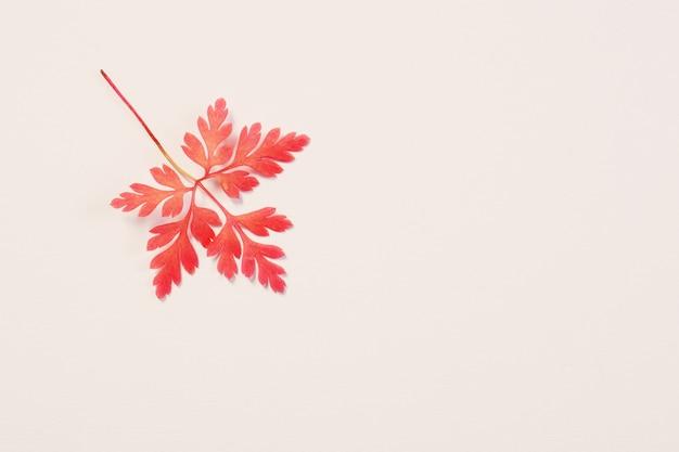 Folha de outono rosa em fundo branco