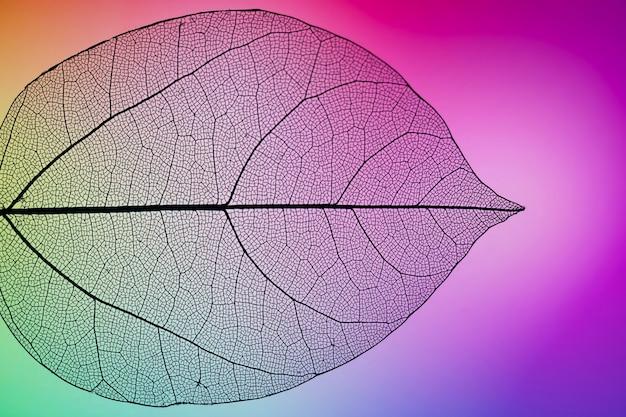 Folha de outono vibrante roxa