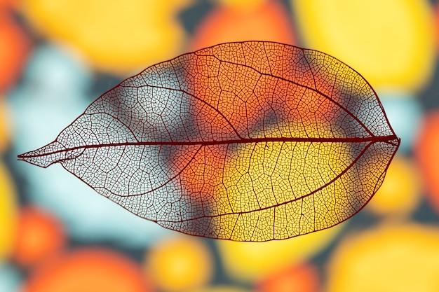 Folha de outono vívida transparente abstrata