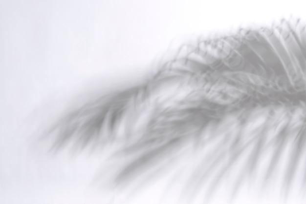 Folha de palmeira abstrata e reflexão da sombra no fundo branco.