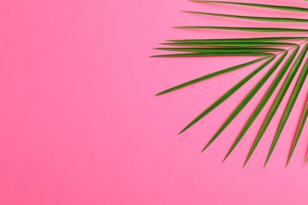 Folha de palmeira bonita na cor de fundo, closeup e espaço para texto. planta exótica