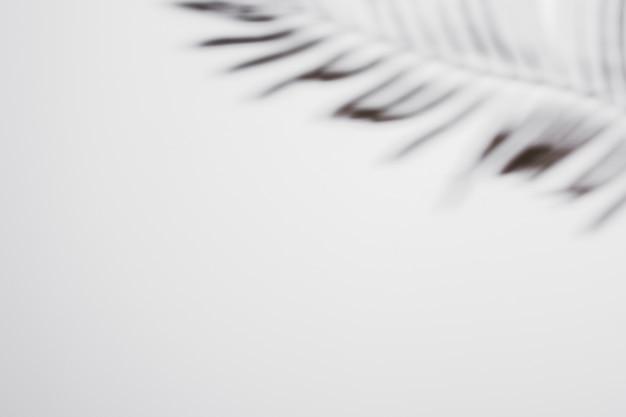 Folha de palmeira com sombra no fundo branco