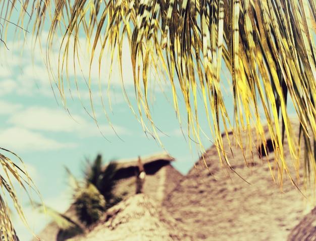 Folha de palmeira de coco close-up