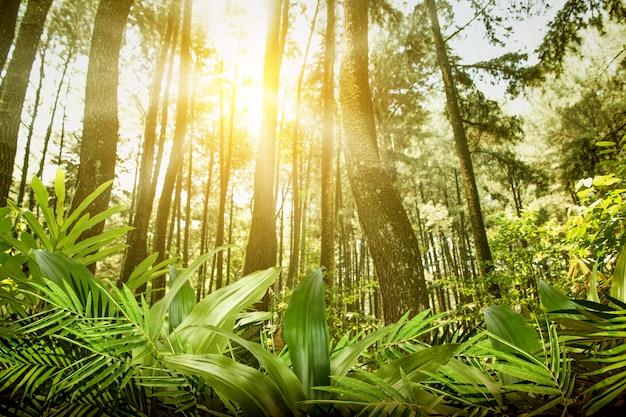 Folha de palmeira e folhas verdes tropicais