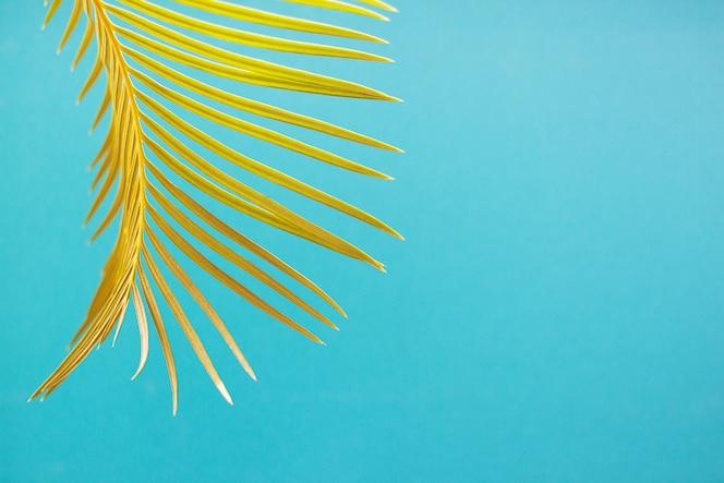 Folha de palmeira em fundo azul