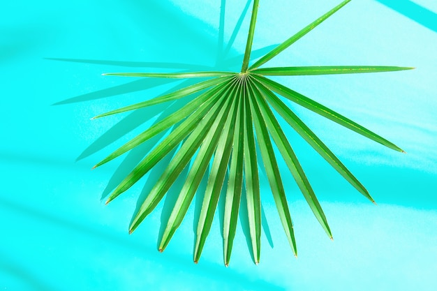 Folha de palmeira espetada redonda sobre fundo azul claro