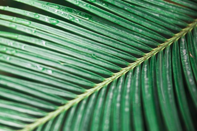 Folha de palmeira molhada do close-up