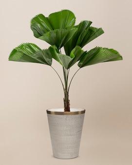 Folha de palmeira ondulada em uma panela cinza